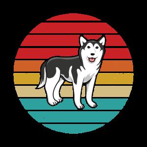 Husky schöner Hund