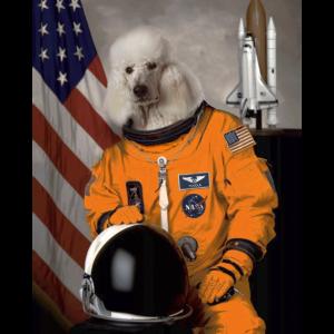 Pudel Besitzer Liebhaber Astronaut
