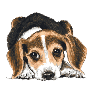 Beagle Hündchen