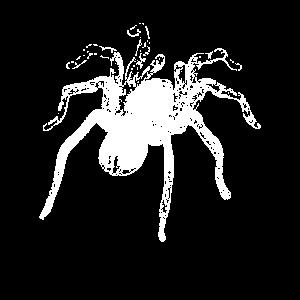 Spinnen Spinnennetz