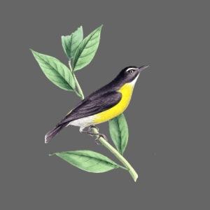 bird yellow-black