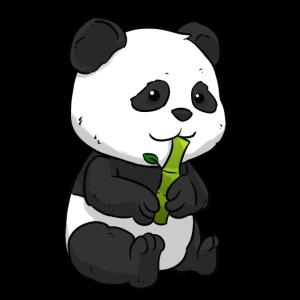 Panda Bambus Pandabär