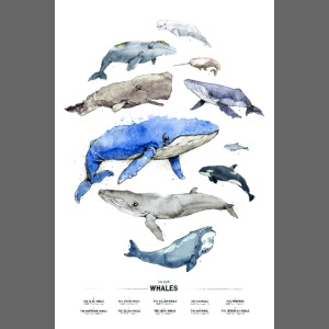 Wale (Whales)