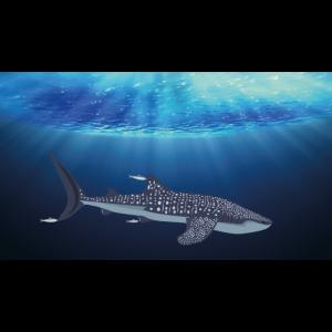 Ozean Walhai