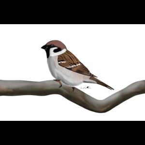 jz.birds Fledsperling Vogelmotiv Dekoration