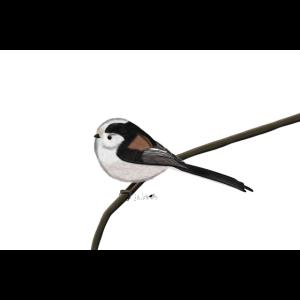 jz.birds Schwanzmeise Vogelmotiv Dekoration