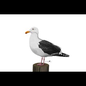 jz.birds Möwe Vogelmotiv Dekoration