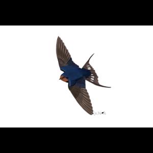 jz.birds Rauchschwalbe Vogelmotiv Dekoration