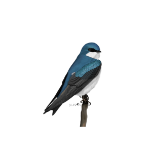 jz.birds Sumpfschwalbe Vogelmotiv Dekoration