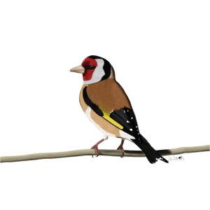 jz.birds Stieglitz Vogel Illustration Dekoration