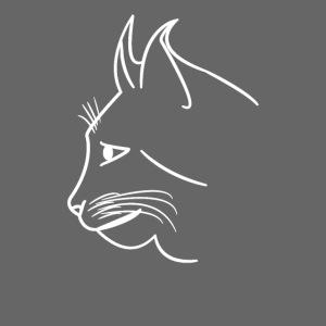 süsse Katze, Kätzchen, Katzen, Tiere, Raubkatze