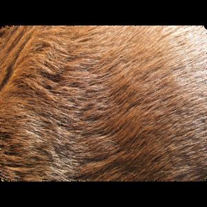 Labrador Fell