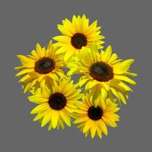 Sonnenblumenstrauss, Sonnenblume, Sonnenblumen