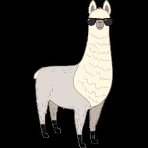 Alpaka mit Sonnenbrille