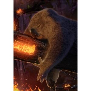 koala fire