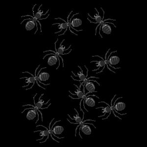 Ameisen Ameise Insekt Waldtiere