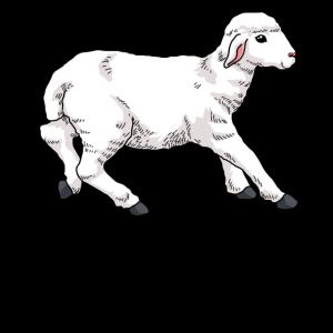 Junges Schaf Lamm