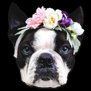Fashion Frenchie mit Blumen