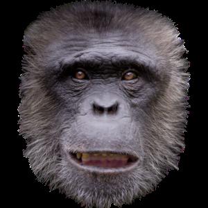 Affe Gesicht Kostüm Lustiges Tier Affen Geschenk