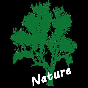 Baum Tree Nature