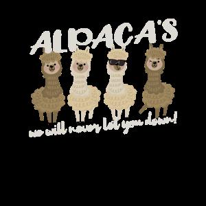 Best Alpaca Team