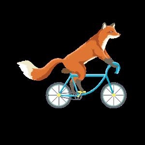 Fox On Bike Bicycle Cycling Fox