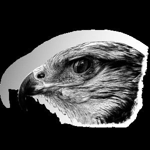 Falke, vogel, Vogelfreund