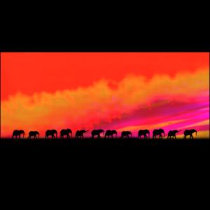 Afrika, Elefanten-Karawane