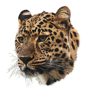 Gepard Leinwand, Raubkatzen, Tiere