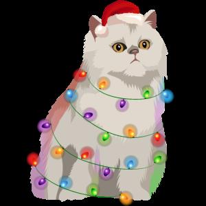 Perserkatze Katze Lichterkette Weihnachten