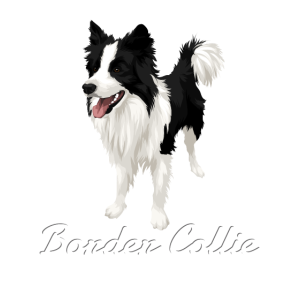 Limited! Border Collie Love