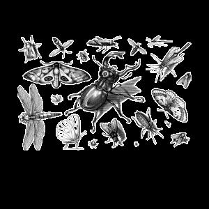Insekten Sammlung Insektenliebhaber