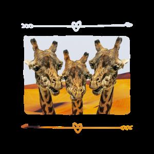 giraffen selfi