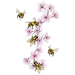 Bienen an Kirschblüten