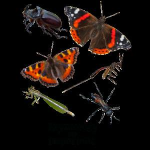 Insekten - Insekten mit Text