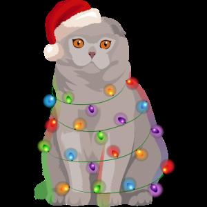 Schottische Faltohrkatze Katze Lichterkette Weihna