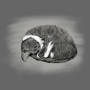 Sleeping Cissi