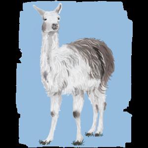 Friedliches Lama