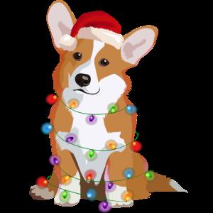 Welsh Corgi Pembroke Hund Lichterkette Weihnachten