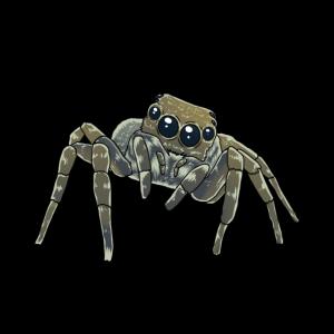 Horror Spinne Phobie Panik Spinnen Halloween