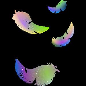 Regenbogenfedern