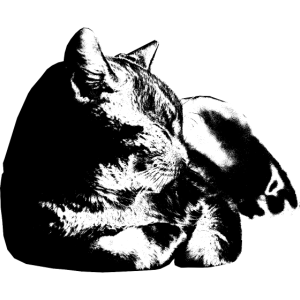 Cat Sleeping | Black and White