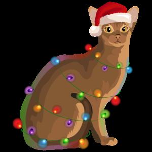 Abessinierkatze Katze Lichterkette Weihnachten