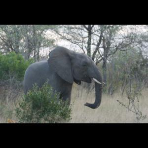 Lustiges Elefanten Baby Ökoaktivist Erderwärmung
