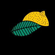 un joli citron atelier kôta illustration dessins boutique produits artist