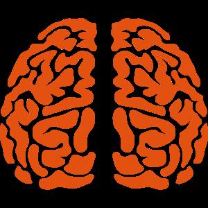 Gehirn Gehirn Gesicht