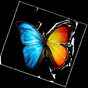 Schmetterling orange und blau