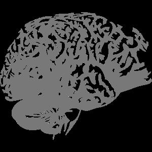 Gehirn Gehirn Intelligenz