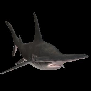 3D Hammerhai