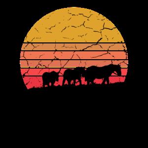 Pferde Herde im Sonnenuntergang